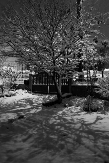 neige 3 nb.jpg